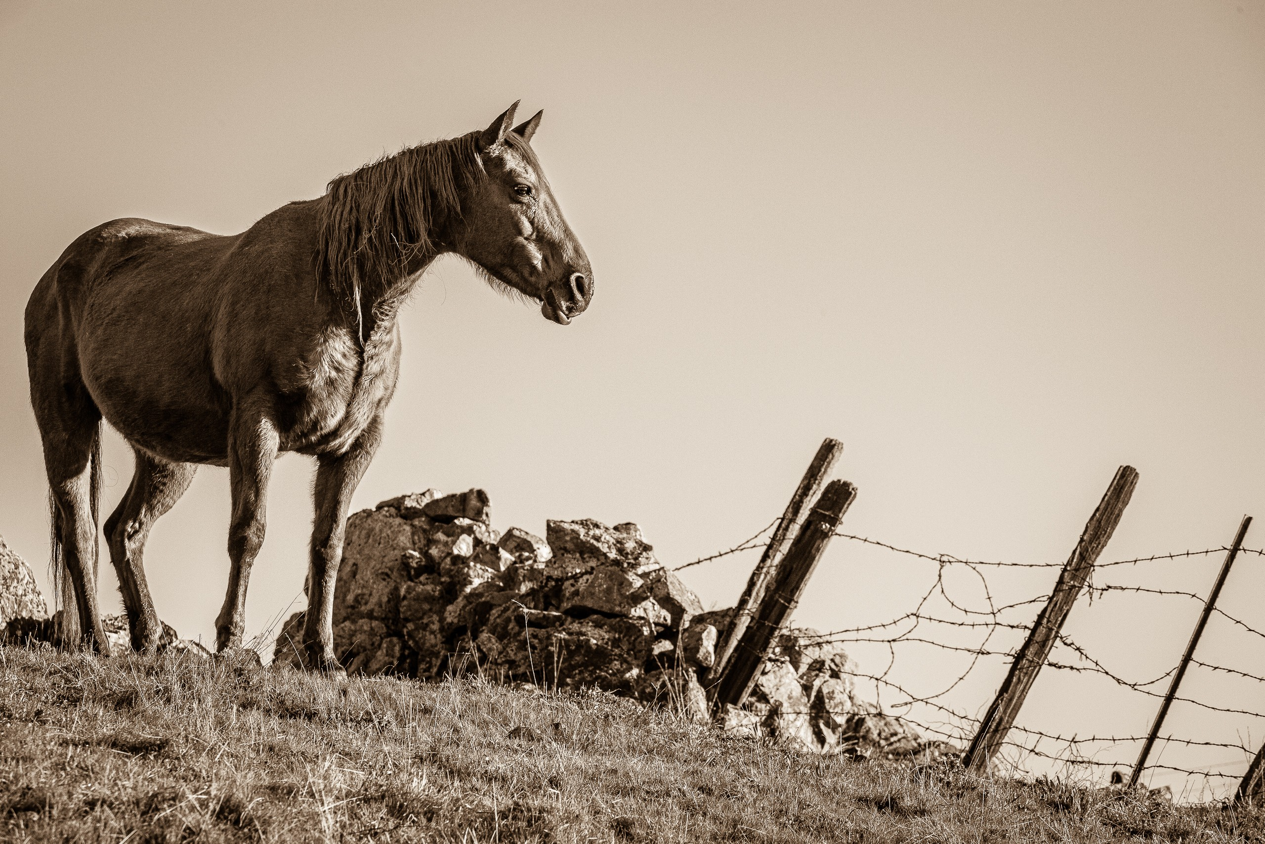 Mending Broken Fences (Sepia)