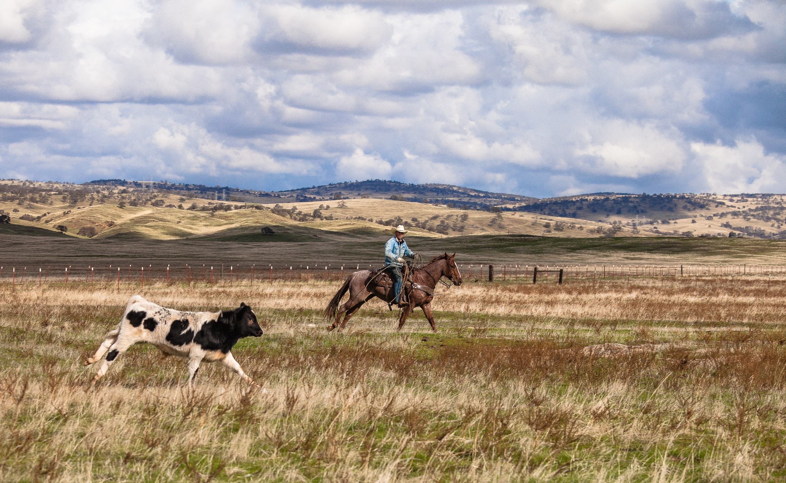 Tracking Him On The Open Range
