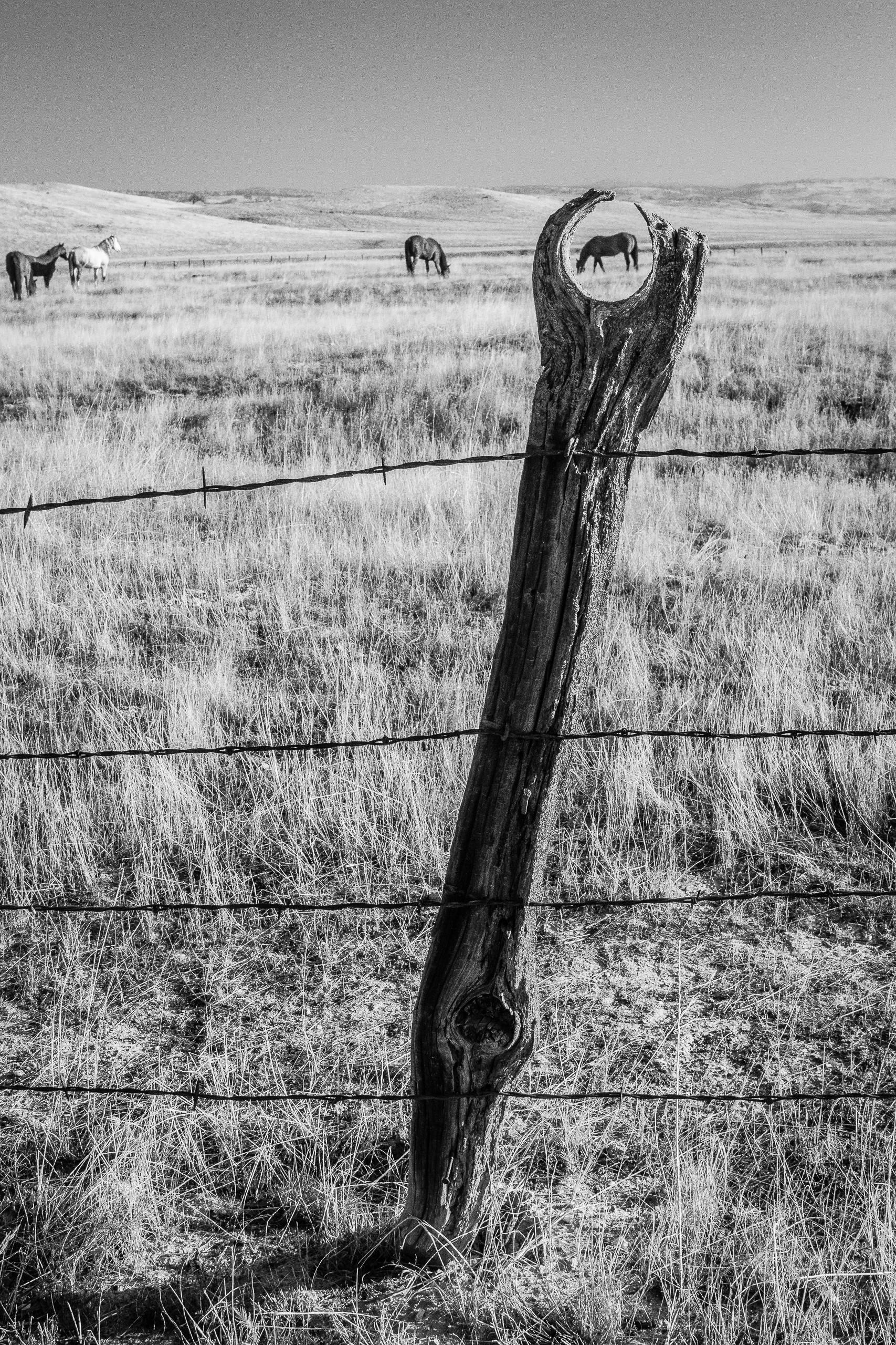 Fence Eye