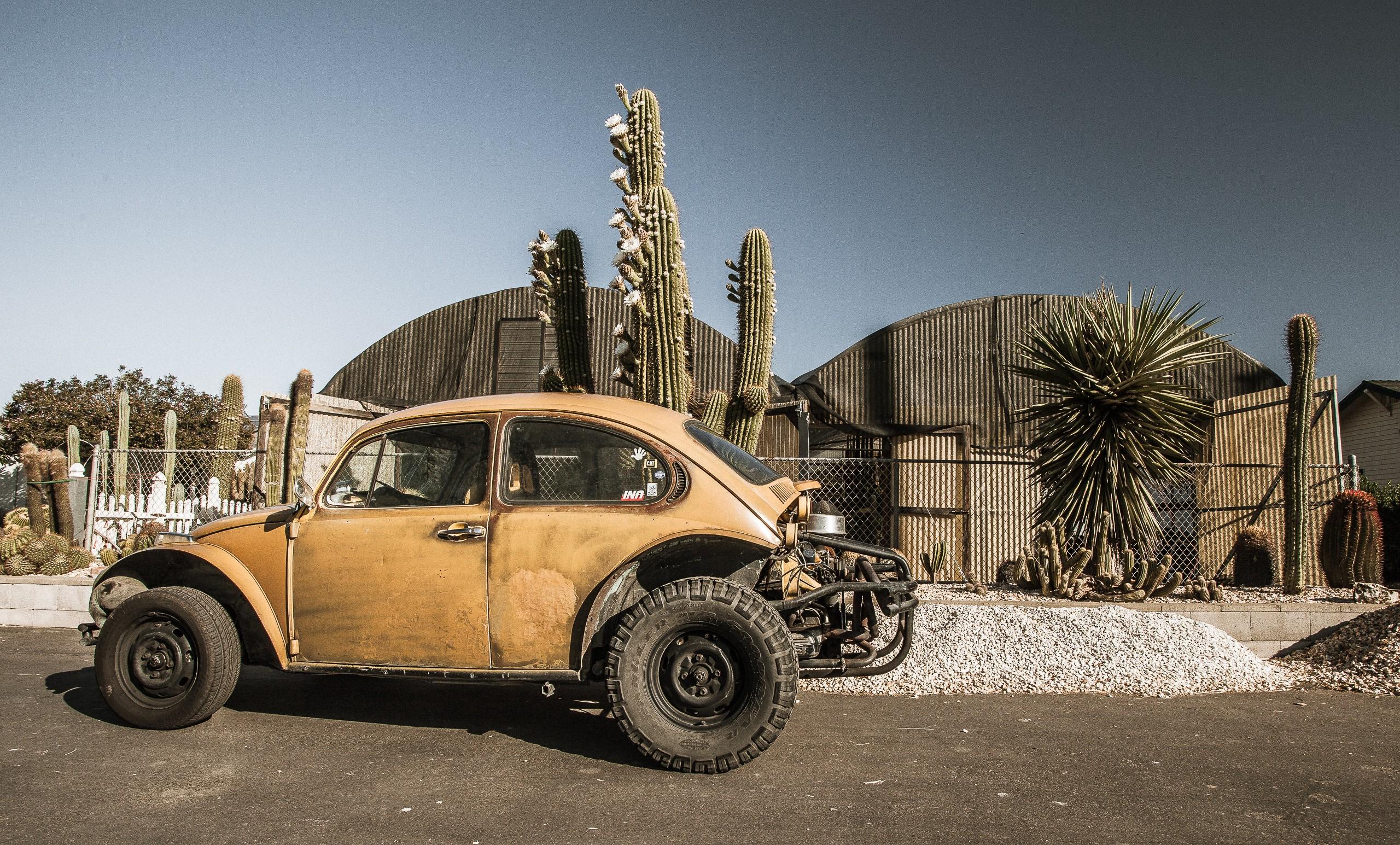 Bug De Cacti