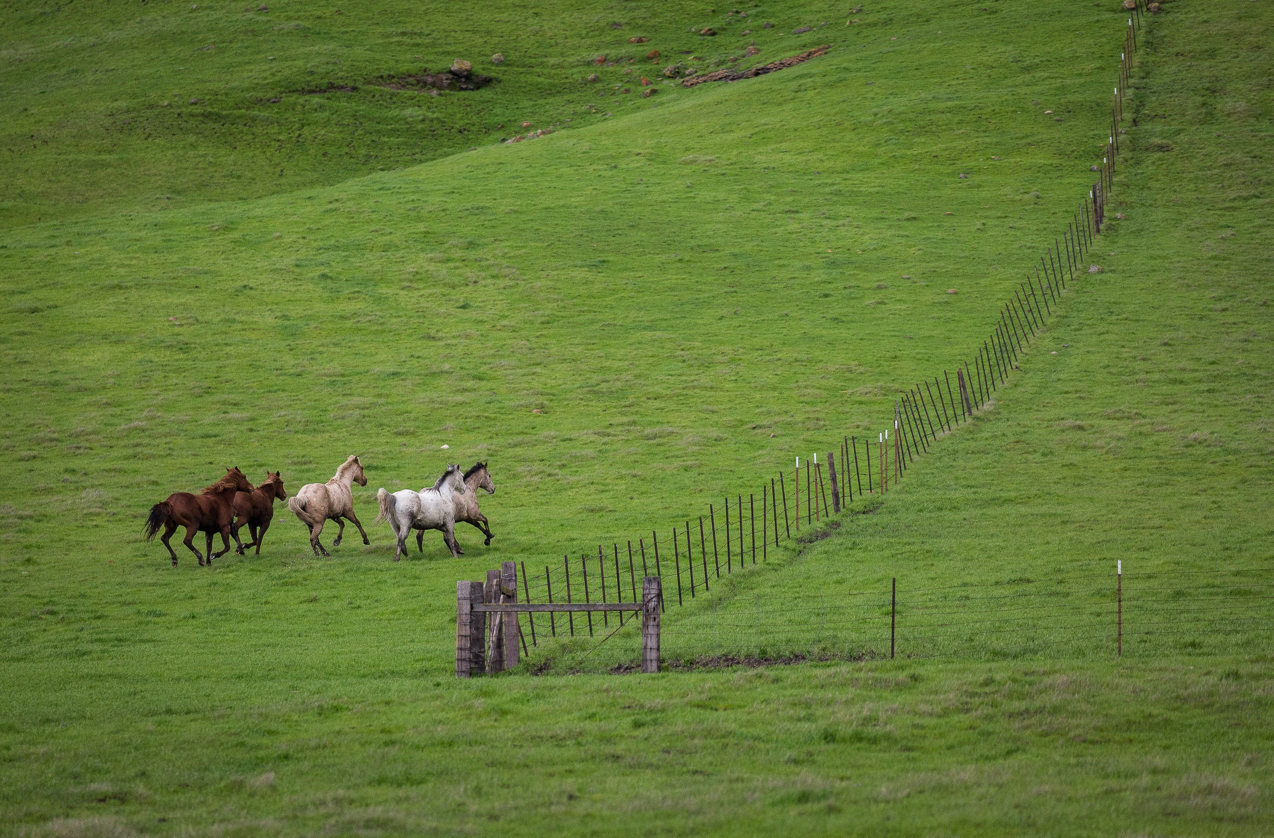 Galloping The Fence Line