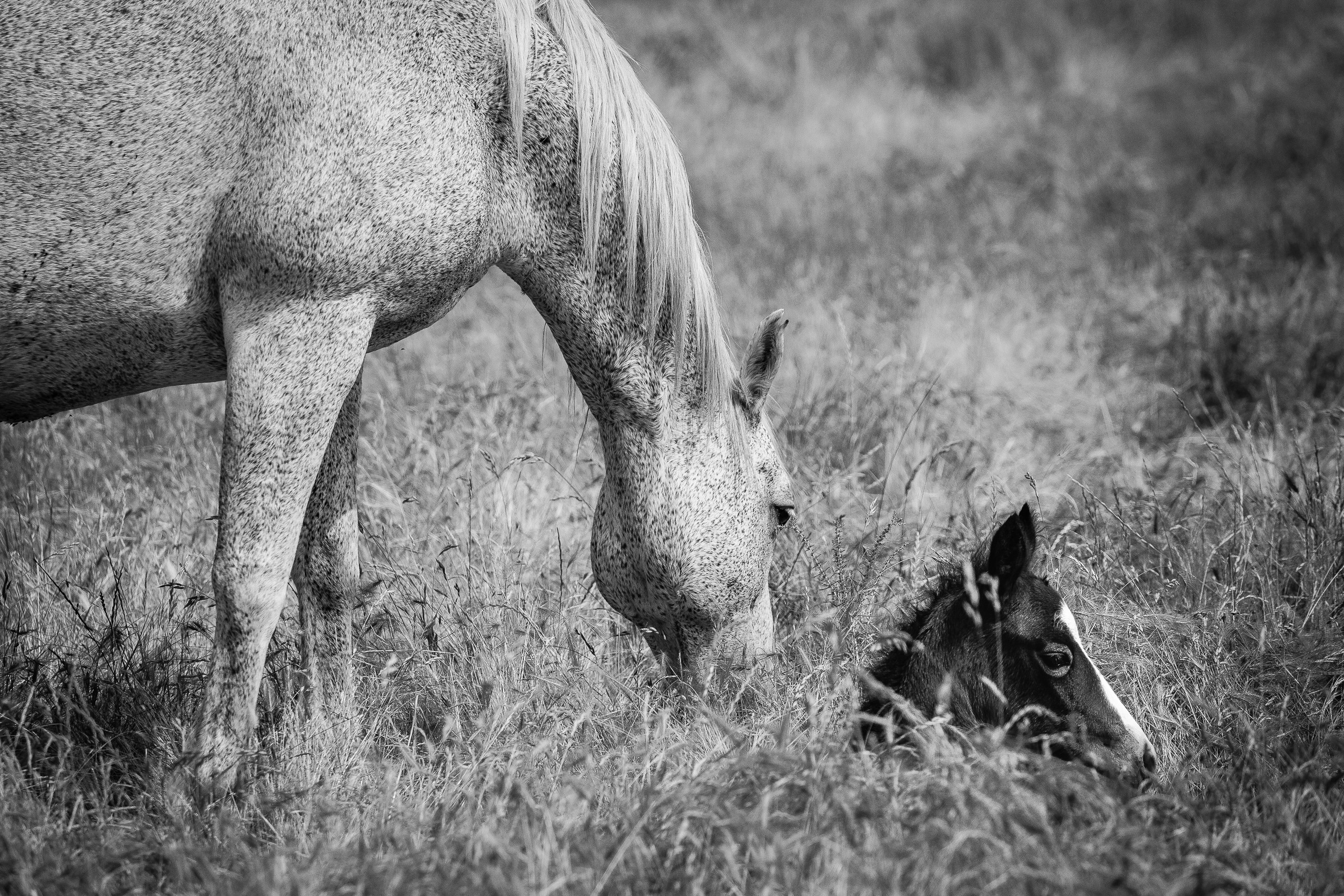 A Mother's Watchful Eye
