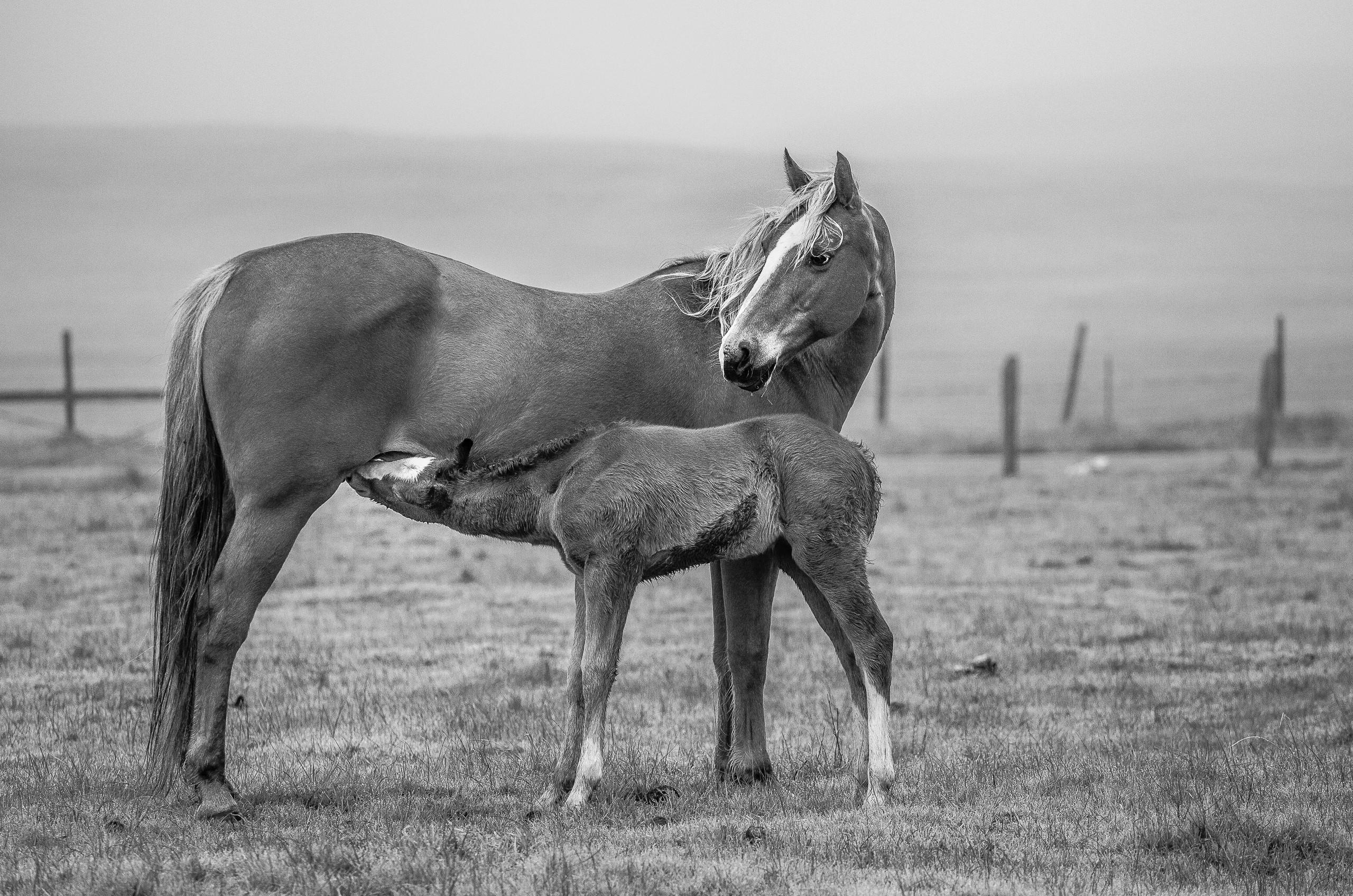 Nourishing Her Foal