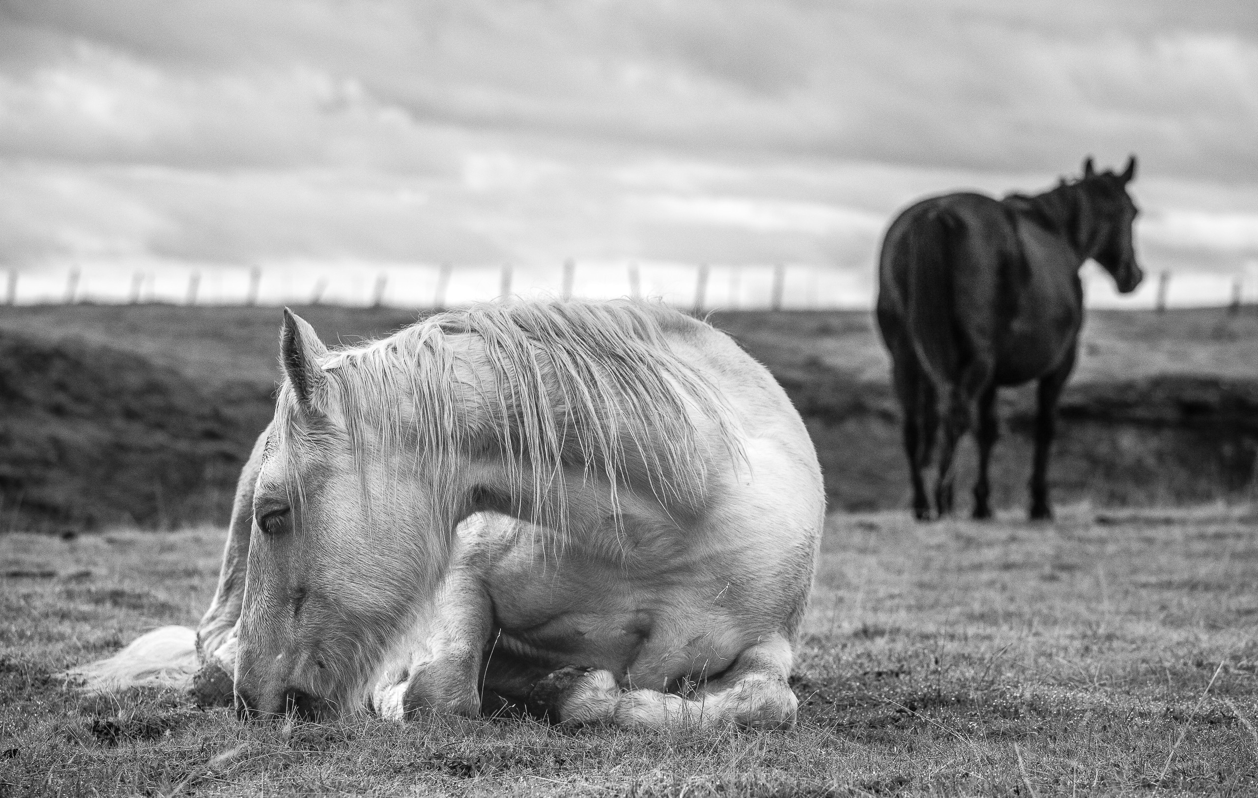 Waiting For Her Foal