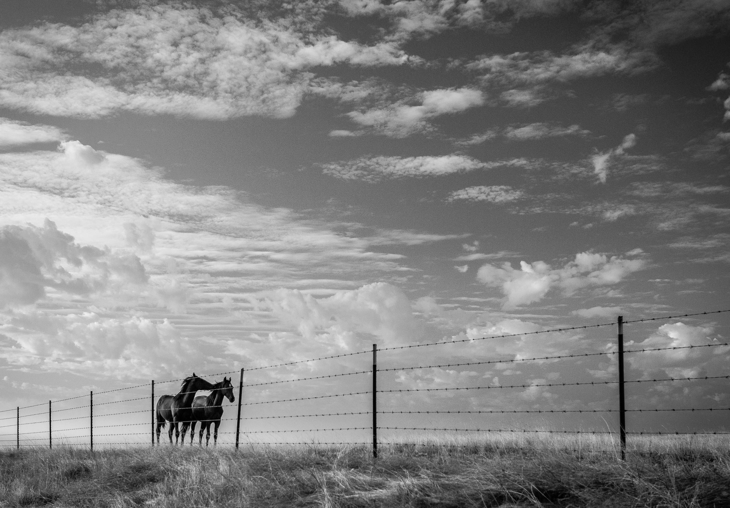 Horses Whisper