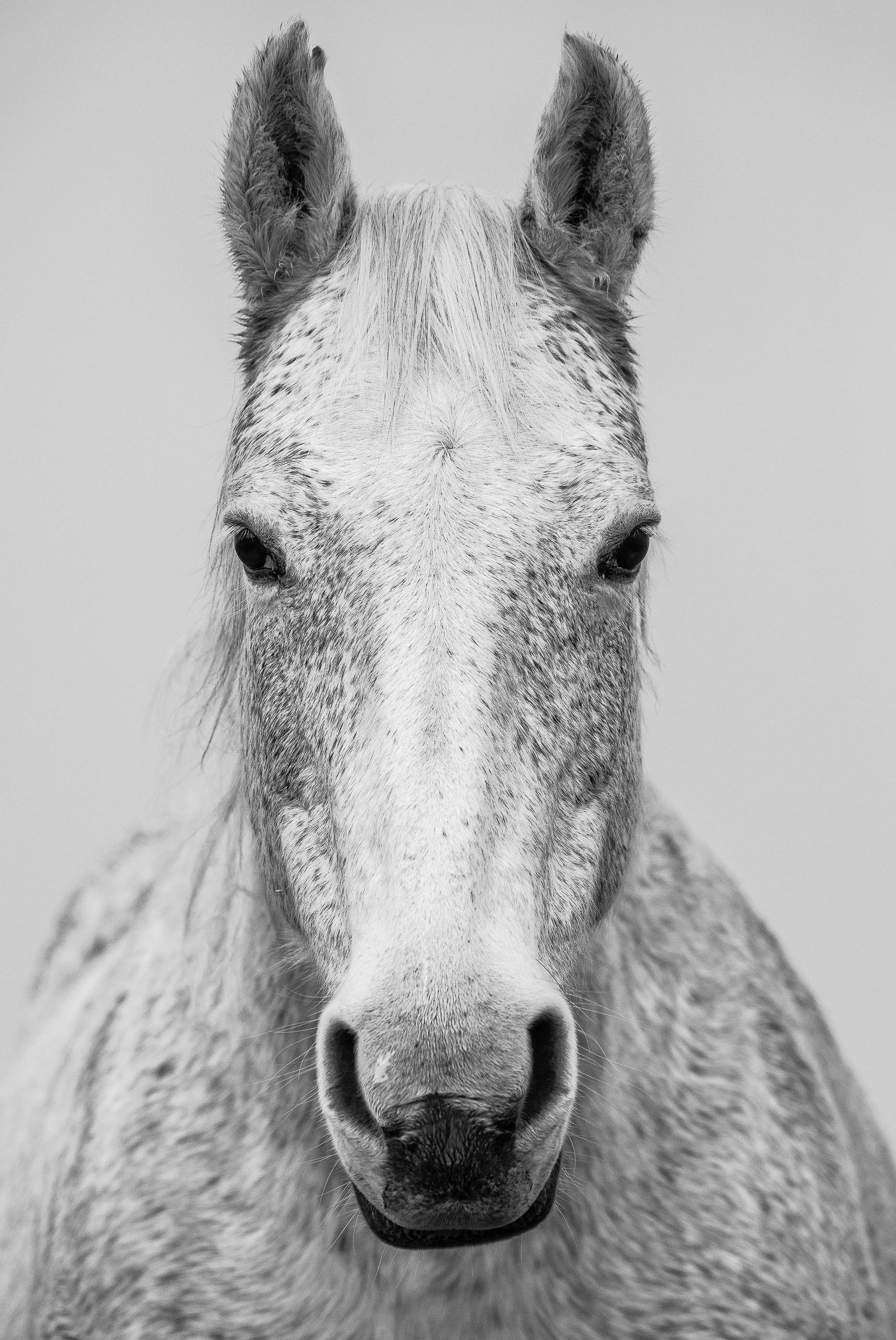 Horse Avedon Frontal