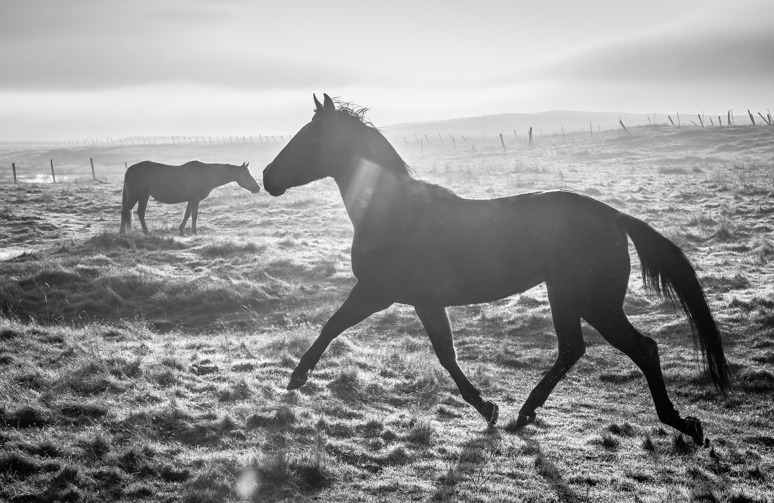 Figure-Grounded Horses