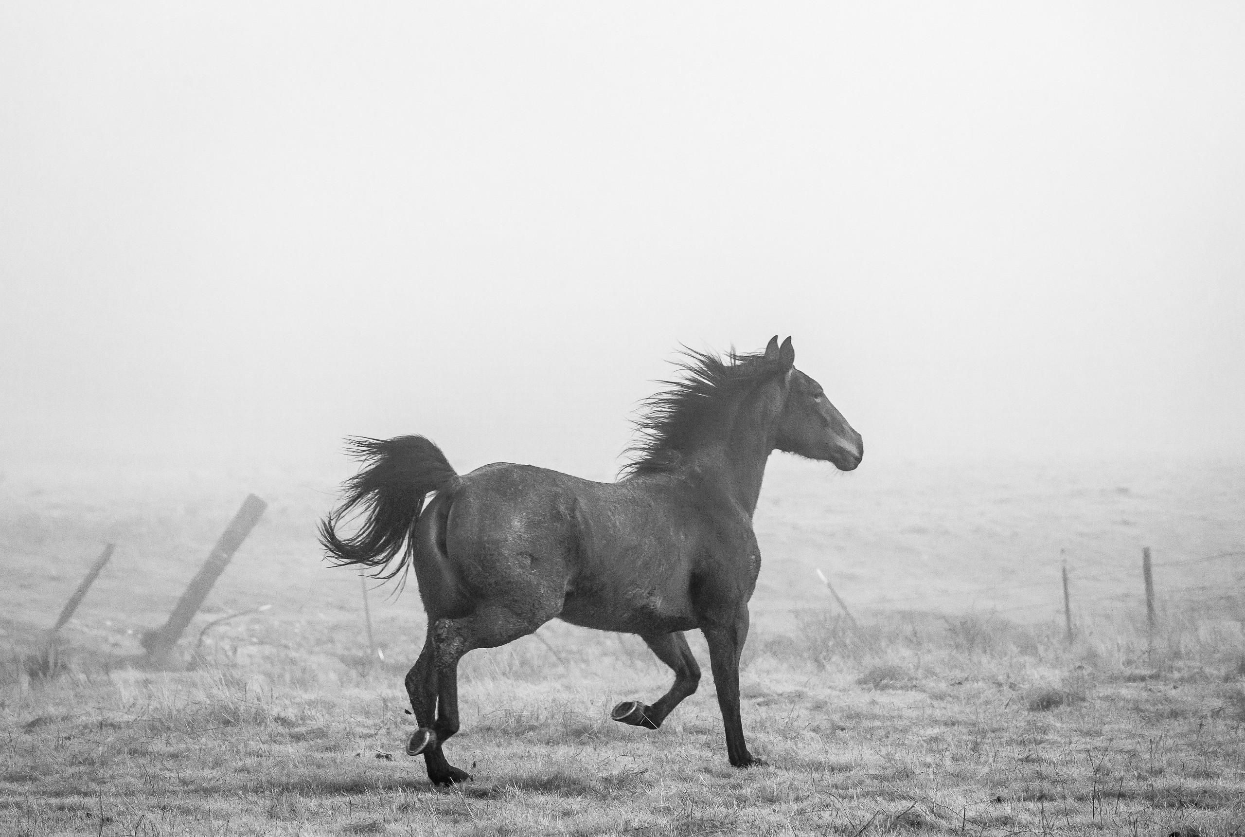 Fog Trot