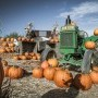 Deere In A Pumkin Patch